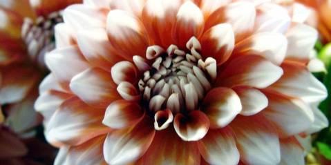 Quelles Fleurs Choisir Pour Une Crémation Dans Nos Coeurs